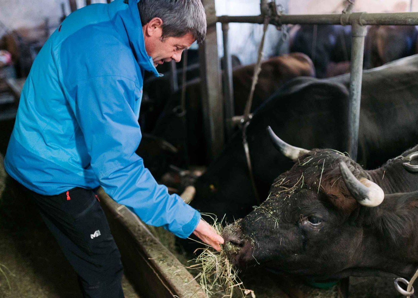 Visite et dégustation des produits de la ferme à Euseigne